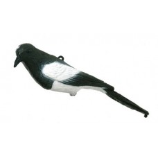 East Anglian Magpie